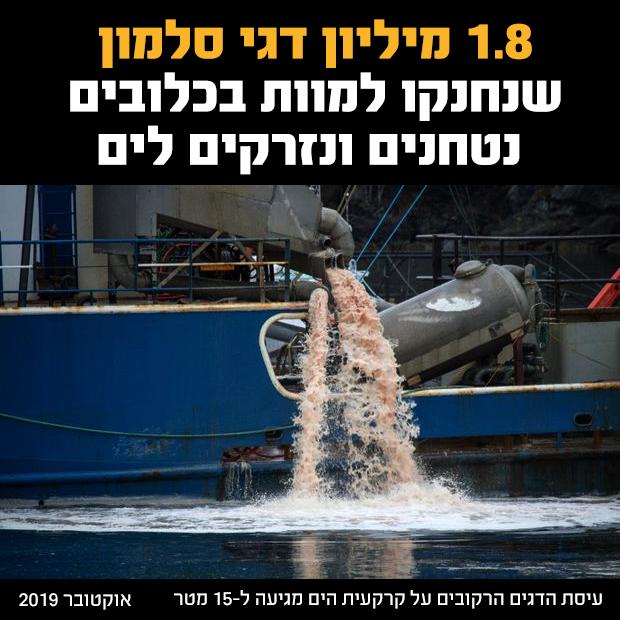 ספינה מרוקנת לים עיסת דגים רקובים מכמעט 2 מיליון דגי סלמון שנחנקו למוות בכלובי התעשייה