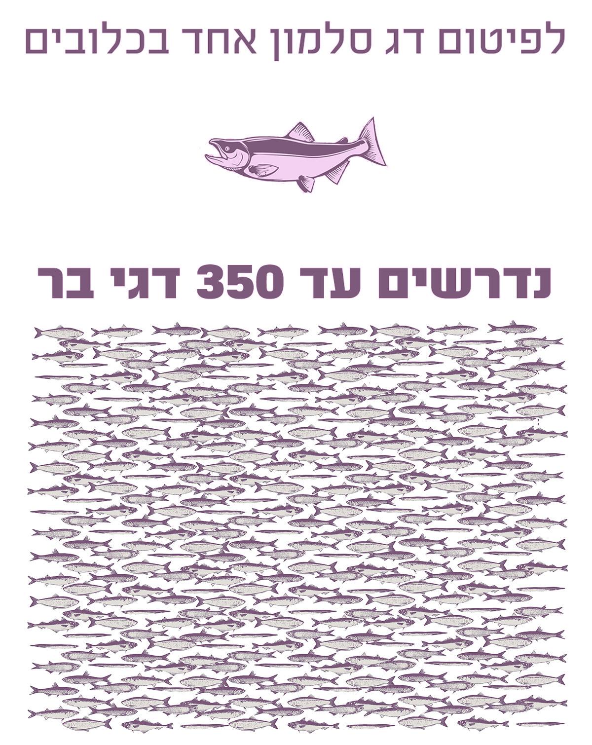 לפיטום סלמון אחד דרושים 350 דגי בר
