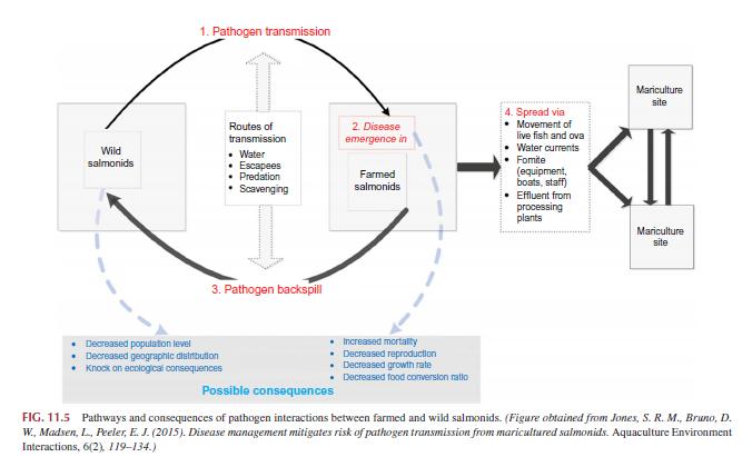 תרשים מדעי השפעות סביבתיות של כלובי הסלמון