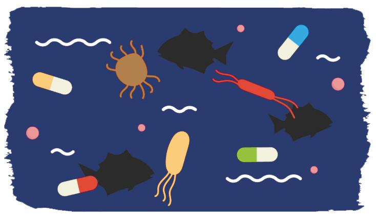 כלובי הסלמון מהווים מדגרה להתרבות מחוללי מחלות ולהפצתם לדגי הבר. איור: https://www.essereanimali.org/en/fishtoo/