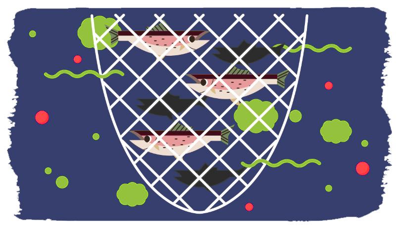 כלובי סלמון מזהמים את הים בחומרי הדברה והפרשות בכמויות שהסביבה הטבעית מתקשה להתמודד איתן. איור: https://www.essereanimali.org/en/fishtoo/